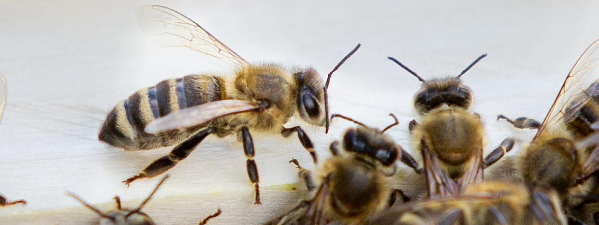 Kräuter- und Bienenhütte
